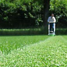 moos im rasen erfolgreich bek mpfen pinterest gardens. Black Bedroom Furniture Sets. Home Design Ideas
