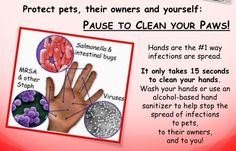 hand washing posters veterinary - Google Search