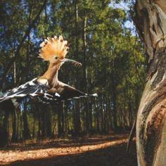cool looking bird