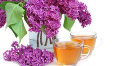 šeříkový syrup jako sladidlo do čaje Beverages, Drinks, Korn, Recipies, Food And Drink, Herbs, Plants, Jelly, Syrup