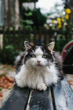 Cat on the bench by Zoran Djekic