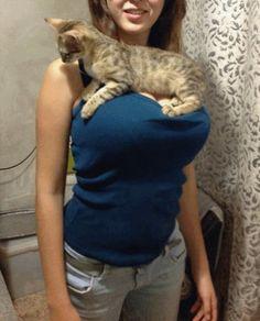 Porta gato - Clique e veja aqui