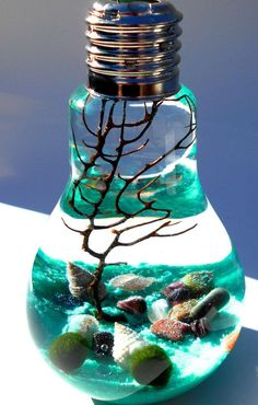 Marimo terrarium, lightbulb terrarium, Aqua terrarium, zen garden, living home decor, wedding favor, hostess gift on Etsy, $35.00