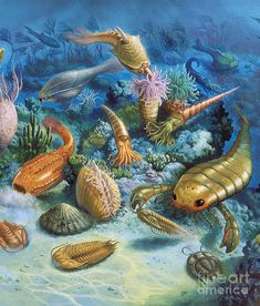 Underwater Life During The Paleozoic