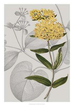 Framed Botanical Arrangement V Print
