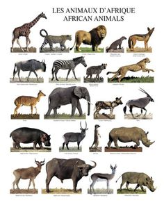 Marvelous Drawing Animals In The Zoo Ideas. Inconceivable Drawing Animals In The Zoo Ideas. Animals Images, Animals And Pets, Cute Animals, Wild Animals, Poster Mural, In The Zoo, Animal Posters, Your Spirit Animal, Mundo Animal