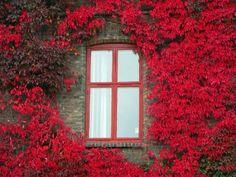 ventana...