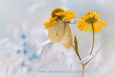 ... by Magda Wasiczek on 500px
