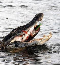 Croc 1:0 Fisherman What a shot!!!