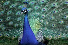 award-winning photography by Beauty Unfurled www.beautyunfurled.com