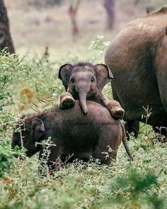 Aww cute fuzzy animals — Photogenic baby elephan… – Oh, süße Fuzzy-Tiere – Fotogenes Elefantenbaby … – Cute Creatures, Beautiful Creatures, Animals Beautiful, Pretty Animals, Baby Animals Pictures, Cute Animal Photos, Baby Elephant Pictures, Animals Images, Cute Little Animals