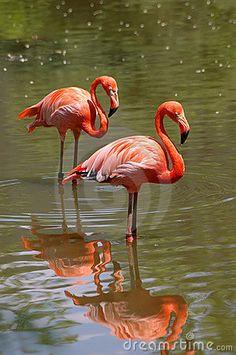 Pink flamingo birds by Christian De Grandmaison, via Dreamstime