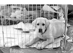 Preparing For and Training Young Puppies - Whole Dog Journal Article