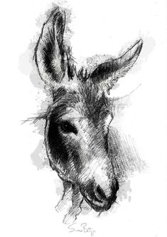 Animal Sketches, Animal Drawings, Cool Drawings, Donkey Drawing, Pencil Sketch Drawing, Feather Painting, Sketch A Day, Equine Art, Linocut Prints