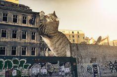 Adorable Photographs Of A Kitten-zilla 'Destroying' A City