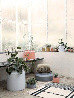 Plant Wall - Circle - Rose