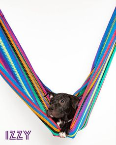 09/05/16-HOUSTON, TX - Robyn Arouty September 3  ·    Dogs In Hammocks  Izzy is…