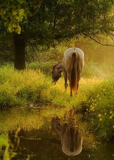 Horse by water