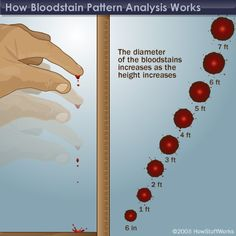 Blood stain analysis