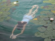 """by Alison Hissey: """"My friend Kelly swimming through water lilies in Lake Bled, Slovenia. I loved the strange, dreamlike quality of the image"""" Paris Film, Asui Boku No Hero, Nature Aesthetic, Looks Cool, Aesthetic Pictures, Underwater, Serenity, Fairy Tales, Scenery"""