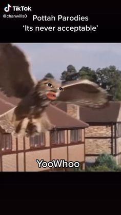 Harry Potter Mems, Harry Potter Parody, Harry Potter Comics, Harry Potter Universal, Harry Potter Fandom, Really Funny Memes, Funny Vidos, Hilarious, Ron Weasly
