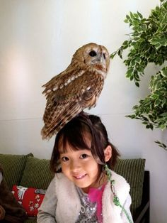 In Japan, there are Owl Cafés where you can pet and play with live Owls while enjoying a meal.,,,,,,,,,,,WHAT sign me up!