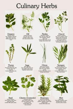 cheat sheets herbs vs spice - Google Search