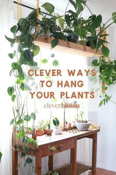 Are you looking for new ways to display plants in your home? Get ideas and inspiration for all you hanging plant needs - Clever Bloom #hangingplants #houseplants #plantdecor Inside Plants, Cool Plants, Cactus Plants, Tropical Plants, Plants In The Home, Decorate With Plants Indoors, Office With Plants, Kitchen With Plants, Foliage Plants
