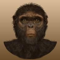 Ardipithecus Ramidus - Artist rendering based on fossils. Fossils date back to years ago. Ardi was bipedal and may have been the last common ancestor of Chimpanzees and Humans. Human Fossils, Early Humans, Human Evolution, Face Illustration, Natural Selection, Prehistoric Animals, Prehistory, Primates, National Museum