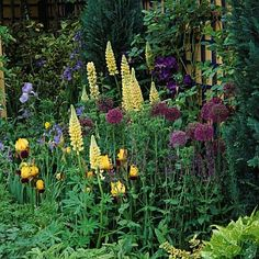 lupins chelsea - Google Search