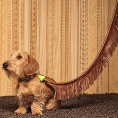 41 insanamente inteligente Produtos seu cão merece proprietário