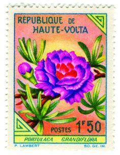 Upper Volta postage stamp: moss rose, c. 1963 by karen horton, via Flickr