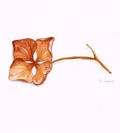 einzelne Hortensienblüte (Scan)