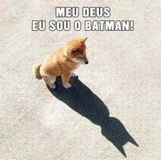 funny digital image picture about dog batman send by email 3 Memes Humor, Funny Dog Memes, Funny Animal Memes, Cute Funny Animals, Funny Animal Pictures, Cute Baby Animals, Funny Dogs, Animals Kissing, Funny Puppies
