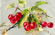 love this cherry picture