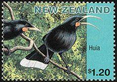 NZ Huia stamp. The female huia had a long curved beak, the male huia had a shorter beak.