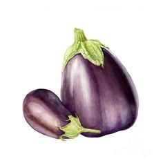 """EUROPEAN EGGPLANT 