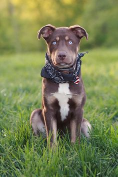 Esos ojos azules hipnotizan (handsomedogs: Photo)