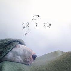 #sweet #dreams #bullterrier #dog #cute http://www.cribeo.com/estilo_de_vida/5263/si-un-bull-terrier-tiene-un-dueno-artista-salen-obras-tan-originales-como-estas