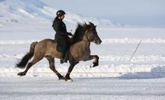 Ride an Icelandic in Iceland.. If I can do so during the Icelandic Horse Festival in Reykajvík that would be all the better!