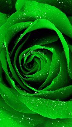 #ADVOCATE1612 #green
