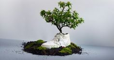 Using old shoes as planters