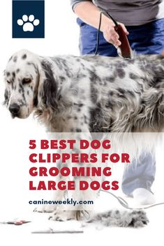 Best Pet Hair Trimmers - If you want a haircut for your large breed dog, you can do it without going to a professional dog groomer. You just need the best dog grooming kit that includes a good dog clipper to make your job easier. Check this post to read our 5 best dog grooming clippers reviews.  #canineweekly #dogclipperspetgrooming #bestdogclippers