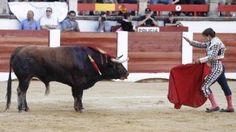 """Julián López """"El Juli"""" ha indultado este domingo a """"Fantasma"""", de la ganadería de Garcigrande, durante su encerrona benéfica en la plaza de toros de Cáceres. El animal, jugado en quinte lugar, ofreció un gran juego durante toda la lidia.  Antes, el madrileño ya había conseguido otros cuatro trofeos en un entretenido festejo celebrado en una plaza cacereña con lleno en los tendidos."""