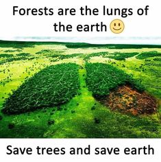 Best picture of Save trees save Earth. Some Amazing Facts, Interesting Facts About World, Unbelievable Facts, Amazing Pics, Awesome, General Knowledge Facts, Knowledge Quotes, Wow Facts, Weird Facts