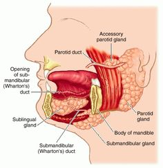diagram of glands under chin wiring diagram database facial anatomy diagram in spanish under chin diagram wiring diagram dom area under chin diagram glands under chin wiring diagram human