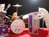 кошки музыканты