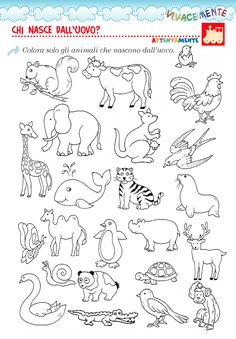 VIVACEMENTE con il cuore e con la mente: marzo 2015 Farm Animals Preschool, Preschool Learning Activities, Teaching Kids, Easter Bunny Colouring, Geography For Kids, Pencil Drawings Of Animals, Scrapbook Patterns, Kids Math Worksheets, Shrink Art
