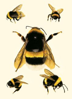 Bee Study Illustration Save The Bees Archival от CarolFarrell