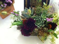 Succulents and flowers in cigar boxes I created for a rustic wedding at Encanterra.